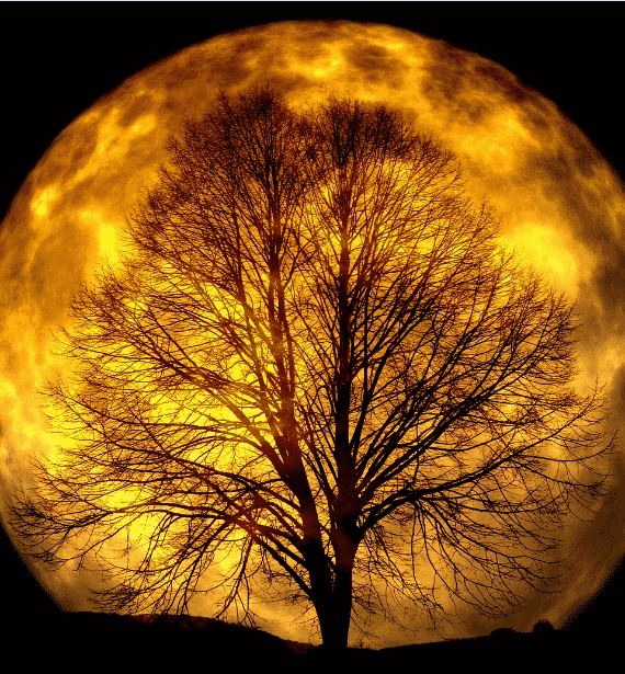 Full moon_cropped